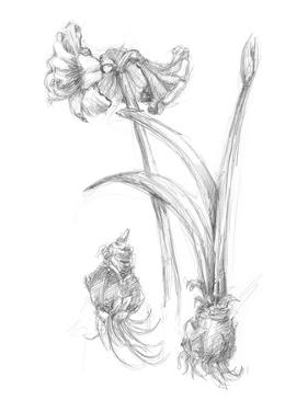 Botanical Sketch IV by Ethan Harper