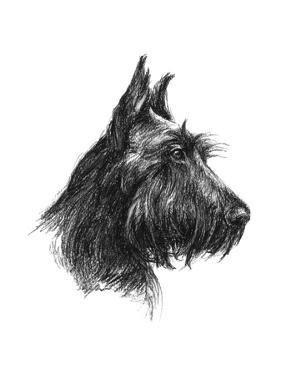 Canine Study II by Ethan Harper