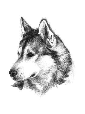 Canine Study III by Ethan Harper