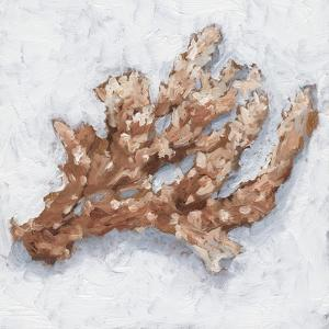 Coral Display II by Ethan Harper