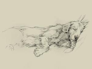 Dog Days III by Ethan Harper