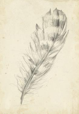 Feather Sketch II by Ethan Harper