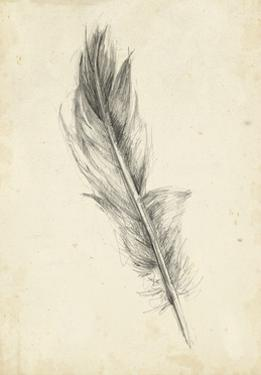 Feather Sketch IV by Ethan Harper