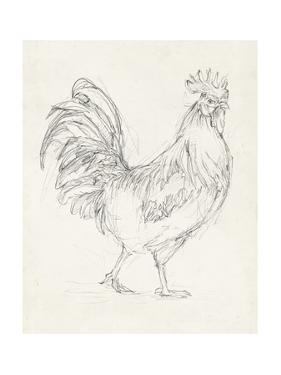 Rooster Sketch I by Ethan Harper