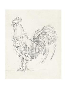 Rooster Sketch II by Ethan Harper