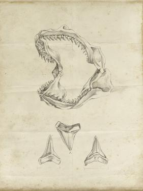 Shark Study II by Ethan Harper