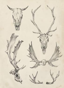 Skull & Antler Study II by Ethan Harper