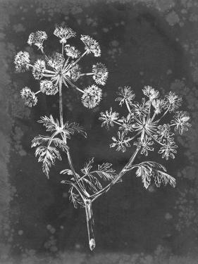 Slate Floral I by Ethan Harper
