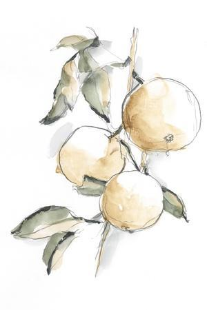 Watercolor Fruit Contour II
