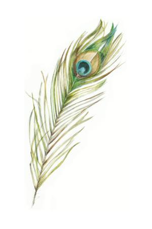 Watercolor Peacock Feather II by Ethan Harper