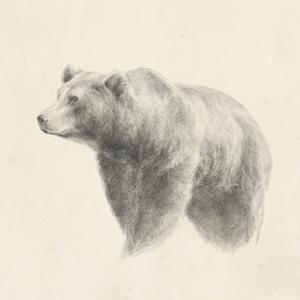 Western Bear Study by Ethan Harper