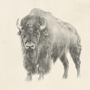 Western Bison Study by Ethan Harper