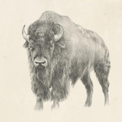 Western Bison Study by Ethan Harper