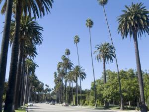Beverly Drive, Beverly Hills, California, USA by Ethel Davies