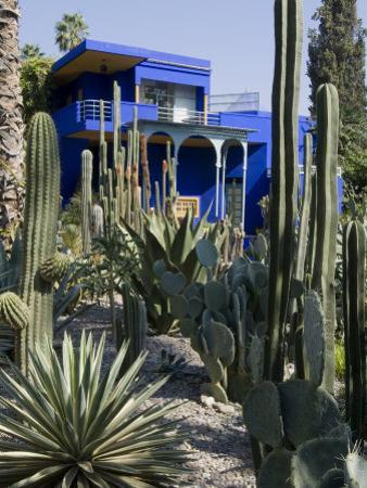 Jardin Majorelle, Marrakech, Morocco, North Africa, Africa by Ethel Davies