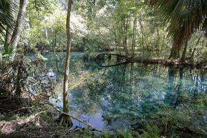 Natural Springs at Silver Springs State Park, Johnny Weismuller Tarzan films location, Florida, USA by Ethel Davies
