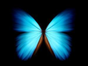 BLUE MORPHO by ethylalkohol