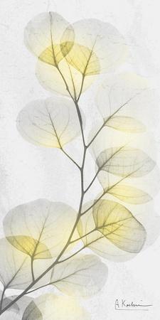 https://imgc.allpostersimages.com/img/posters/eucalyptus-sunshine-1_u-L-Q1H6XCP0.jpg?p=0