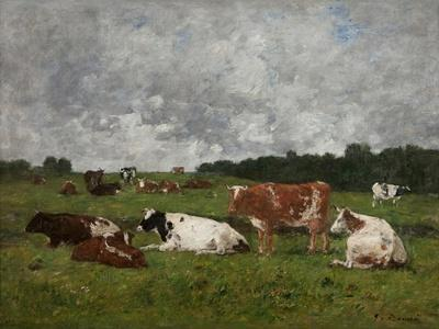 Cows at the Pasture