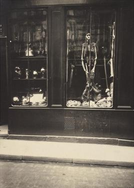 Zoologist's Shop by Eugene Atget