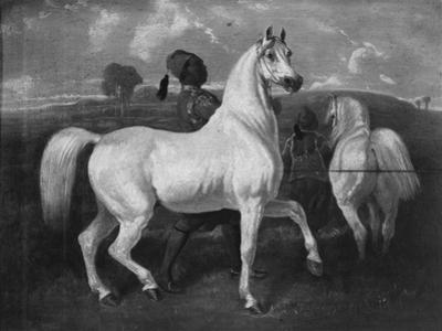 Arabian Horses, 19th Century