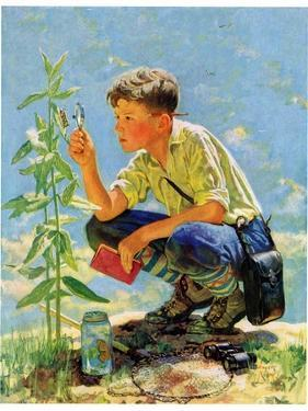 """Boy Botanist,""August 27, 1932 by Eugene Iverd"
