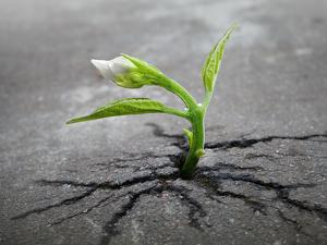 Little Flower Sprout Grows Through Urban Asphalt Ground by Eugene Sergeev