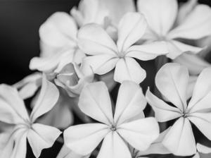 Botanical Under Cold Moonlight I by Eva Bane