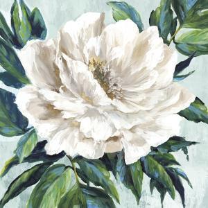 Freshly Bloomed I by Eva Watts