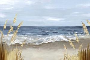 Untouched Beach Grass by Eva Watts