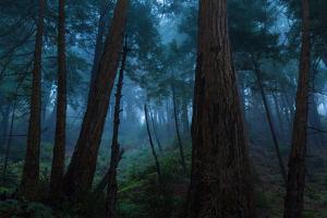 Big Sur Redwood Forest by EvanTravels