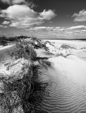 Dune Swale by Eve Turek