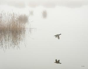 Fog Flyer by Eve Turek
