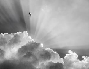 Heavenly by Eve Turek