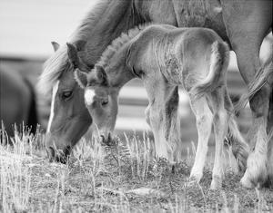 Like Mother, Like Son by Eve Turek