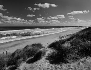 Long View by Eve Turek
