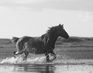 Run Like the Wind by Eve Turek