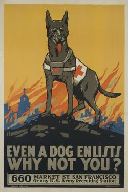 Even a Dog Enlists, Why Not You?