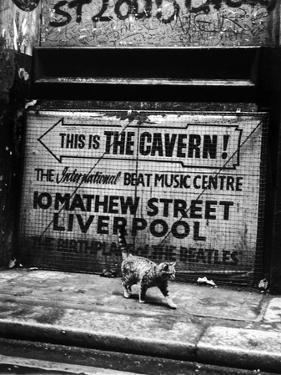 Hep Cat by Evening Standard