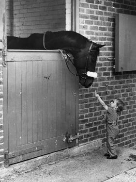 Horse and Child by Evening Standard