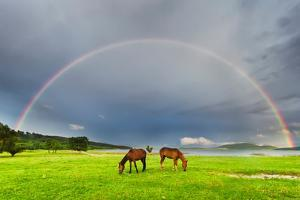 Horses under Rainbow by Evgeni Dinev Photography