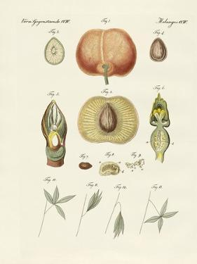 Evolution and Reproduction of Plants and Sleep of the Leaves