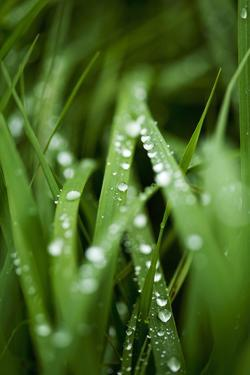 Close-Up of Raindrops on Grass by Ewa Ahlin