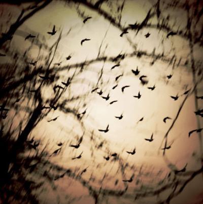 Birds Flying from Tree