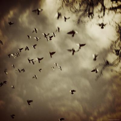 Birds Flying overhead