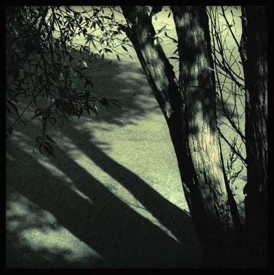 Branch Shadows