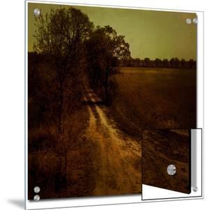 Dirt Trail through Trees by Ewa Zauscinska