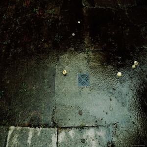 Fallen Apples in the Rain by Ewa Zauscinska