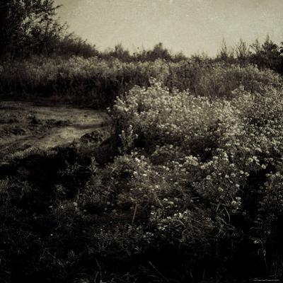 Flowers along Trail in Bloom