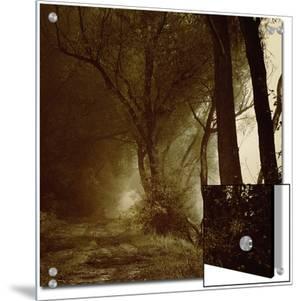 Foggy Path through Forest by Ewa Zauscinska